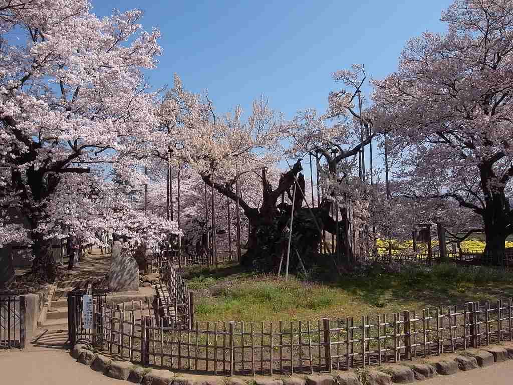 4月10日、韮崎と笛吹市での写真2_f0138096_9572946.jpg