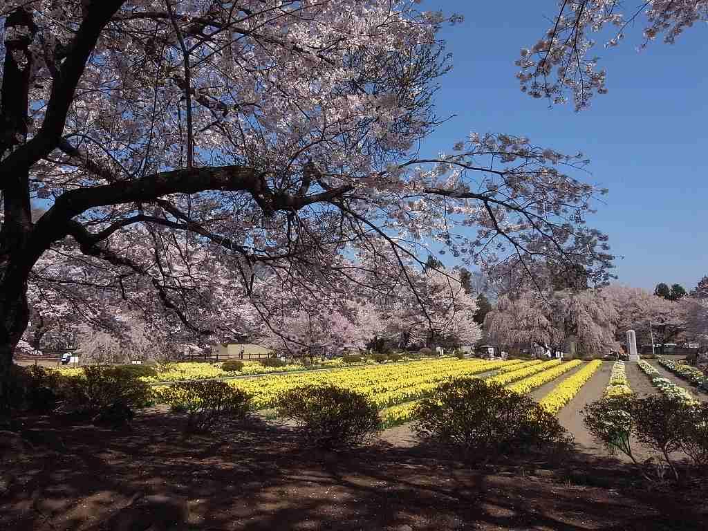 4月10日、韮崎と笛吹市での写真2_f0138096_957447.jpg
