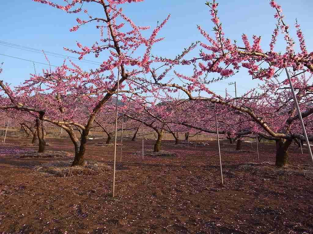 4月10日、韮崎と笛吹市での写真2_f0138096_958146.jpg