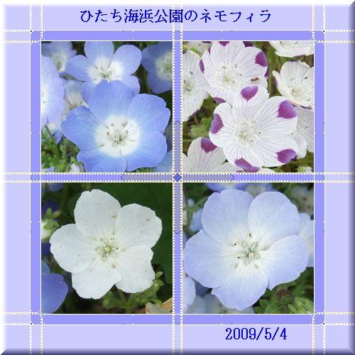 d0048312_2030079.jpg