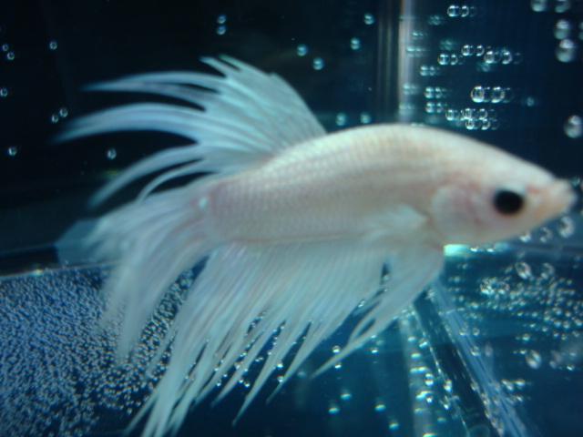 熱帯魚・水草_f0189122_1511129.jpg