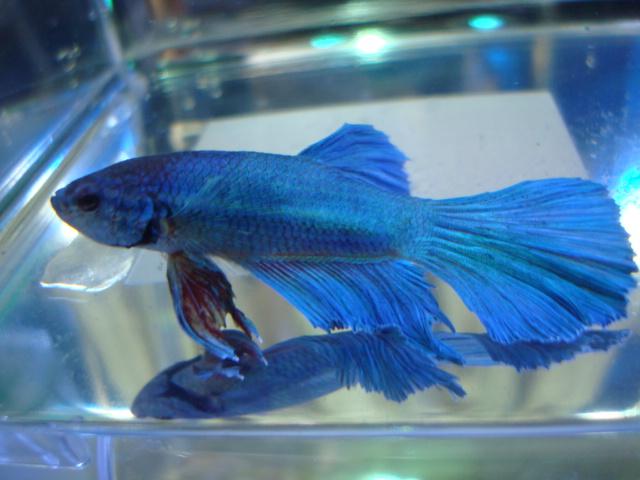 熱帯魚・水草_f0189122_1595147.jpg