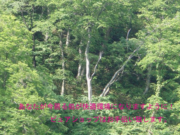 f0192723_2157245.jpg