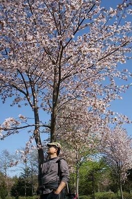 ちょっと散歩へ!モエレ公園桜満開!+焼酎呑み呑みベランダジンギスカン!_c0134029_12182029.jpg
