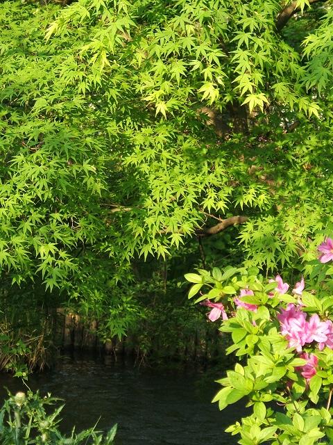 向島百花園に行ってきました その5_e0089232_1822689.jpg