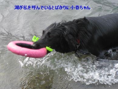 b0148945_22123463.jpg
