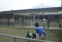 盲導犬の里・富士ハーネス_e0127286_12184693.jpg