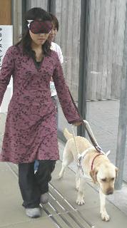 盲導犬の里・富士ハーネス_e0127286_12185737.jpg