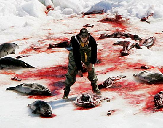 カナダのアザラシ猟、大きな一歩へ_c0027188_5144420.jpg