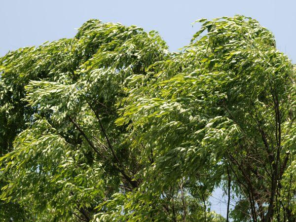 板橋植物園_c0164709_7295915.jpg