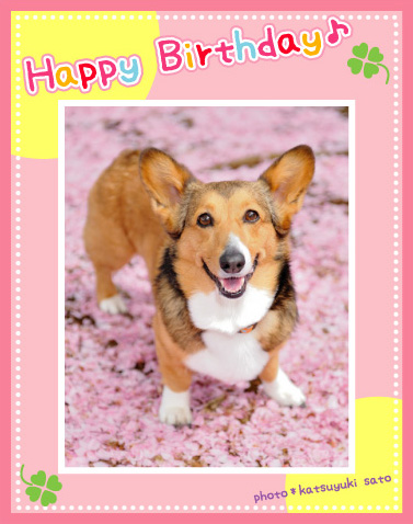 小夏ちゃん、お誕生日おめでとう♪_d0102523_2353171.jpg