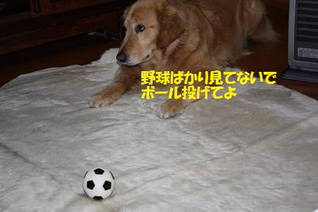 f0114128_20365019.jpg