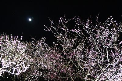 夜桜ならぬ、夜梅!平岡梅林公園堪能!_c0134029_2029779.jpg