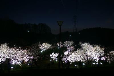 夜桜ならぬ、夜梅!平岡梅林公園堪能!_c0134029_20332728.jpg