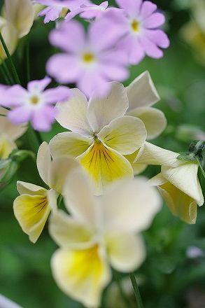 small garden_c0093830_1758463.jpg