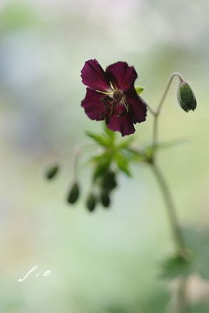small garden_c0093830_1822137.jpg