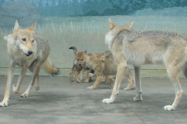 オオカミっ子が近いです。_b0024758_23172273.jpg