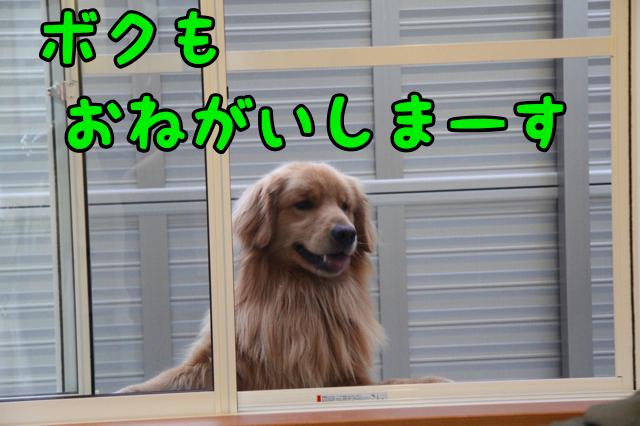 f0166359_1612874.jpg