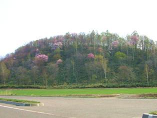 山々はピンク色に ^^//_c0163376_19463296.jpg