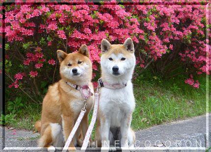 花・花・花_a0053987_21182799.jpg