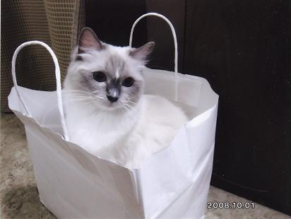 仔猫のその後_d0126813_2046121.jpg