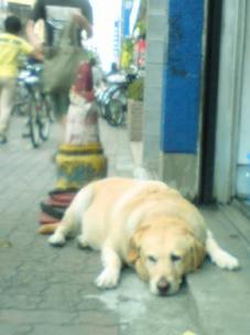 man\'s best friend_f0064823_212716.jpg