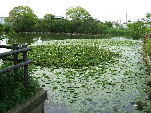 水元公園の花など_e0089232_0284080.jpg