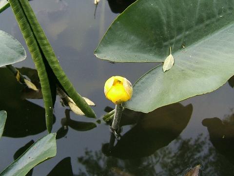 水元公園の花など_e0089232_029078.jpg