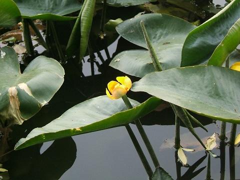 水元公園の花など_e0089232_029639.jpg