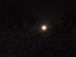 満月の夜_d0100638_22112388.jpg