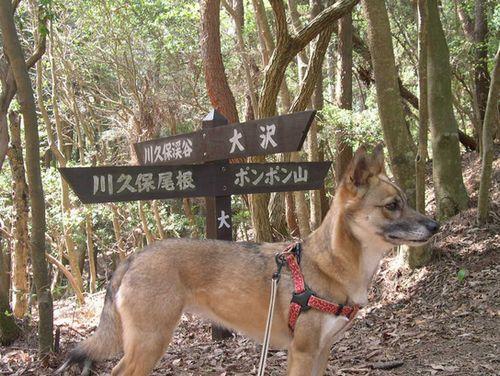 西山古道 Ⅱ 善峯寺から_b0025947_0345549.jpg