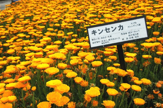 和歌山県植物公園緑花センター _b0093754_0213491.jpg