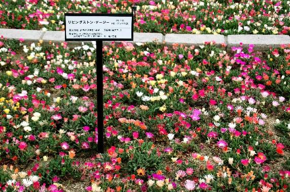 和歌山県植物公園緑花センター _b0093754_0215142.jpg