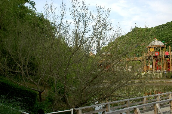 和歌山県植物公園緑花センター _b0093754_0234924.jpg