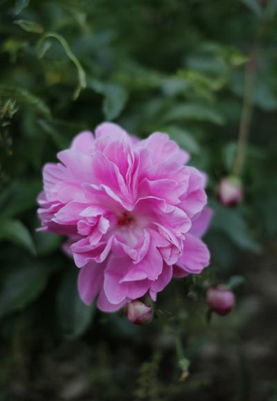 咲いては散る。_d0121381_23224184.jpg