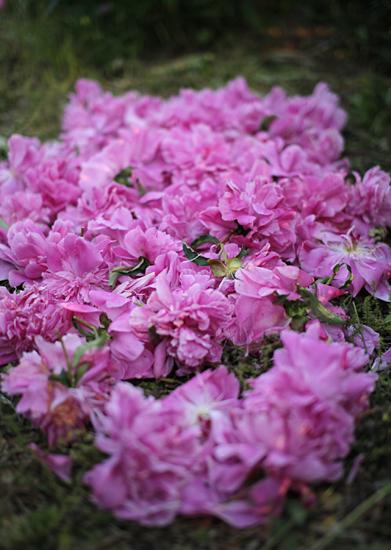 咲いては散る。_d0121381_23235273.jpg