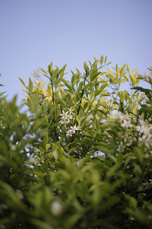 咲いては散る。_d0121381_2342975.jpg