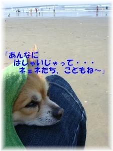 b0138506_234981.jpg