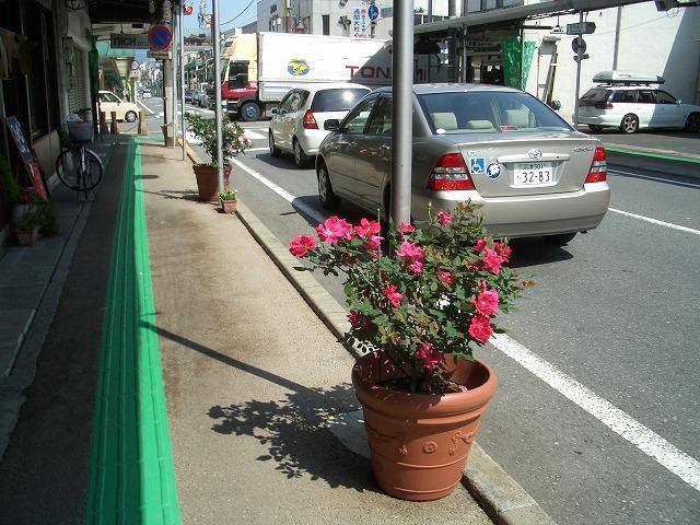 オープンガーデン富士宮2009_f0141310_22232442.jpg