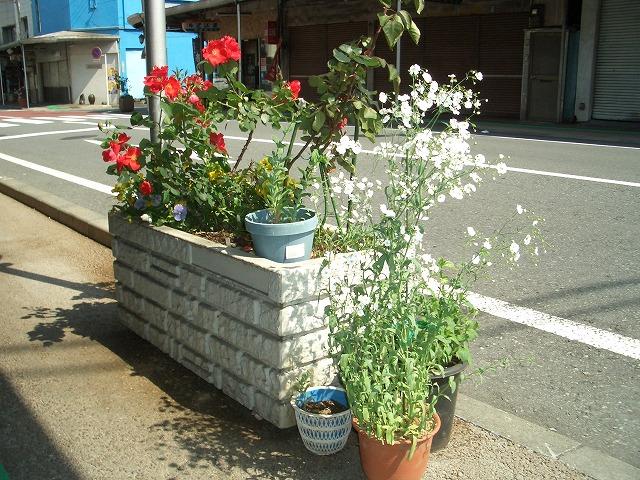 オープンガーデン富士宮2009_f0141310_22235240.jpg
