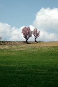 桜満開♪_f0096216_15465416.jpg