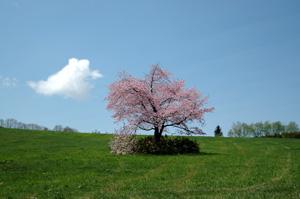 桜満開♪_f0096216_15473242.jpg