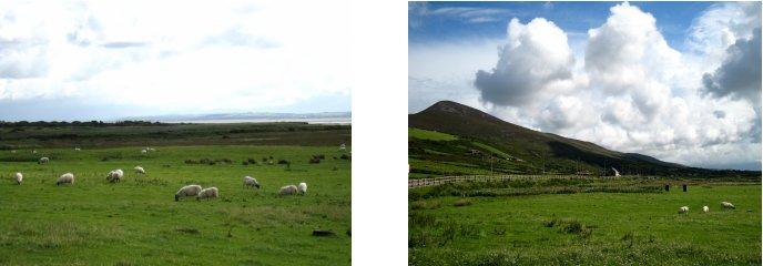 アイルランド編(41):ディングル半島(08.8)_c0051620_8581581.jpg