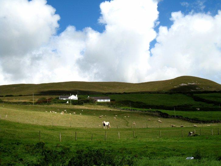 アイルランド編(41):ディングル半島(08.8)_c0051620_925964.jpg