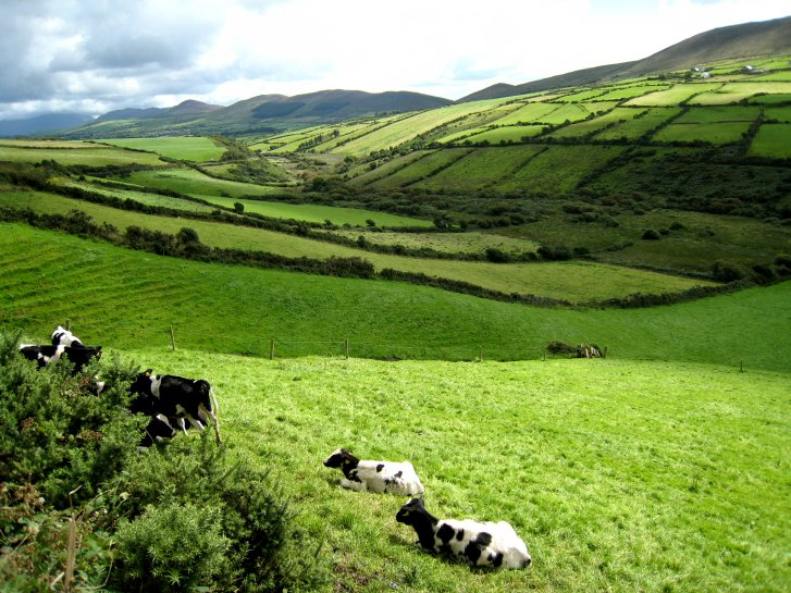 アイルランド編(41):ディングル半島(08.8)_c0051620_932272.jpg