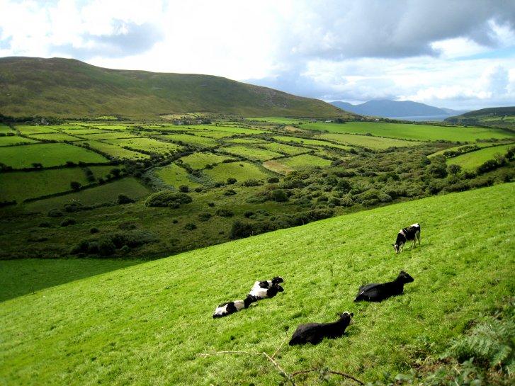 アイルランド編(41):ディングル半島(08.8)_c0051620_935582.jpg