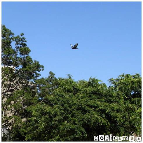 飛んでた鳩_f0127422_1865527.jpg