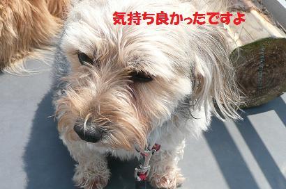 今日はみんなのシャンプー日和_f0114128_20111317.jpg