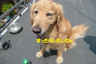 今日はみんなのシャンプー日和_f0114128_2052456.jpg