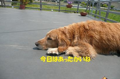 今日はみんなのシャンプー日和_f0114128_2072778.jpg